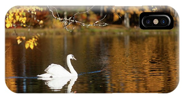Swan On A Lake IPhone Case