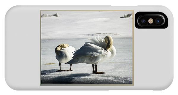 Swans On Ice IPhone Case