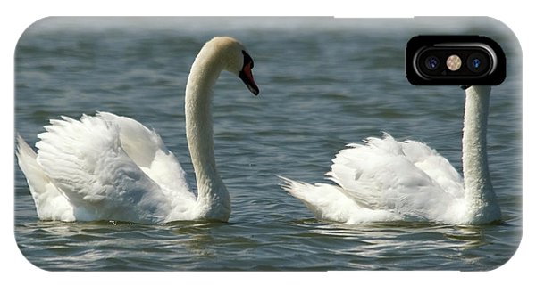 Swans On Lake  IPhone Case