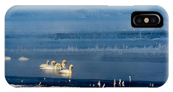 Swans On The Lake IPhone Case