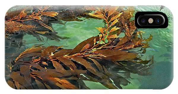 Swaying Seaweed IPhone Case