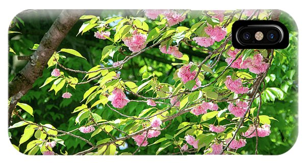 Sweeping Cherry Blossom Branches IPhone Case