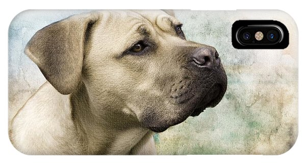 Sweet Cane Corso, Italian Mastiff Dog Portrait IPhone Case