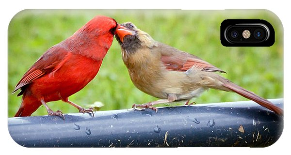 Sweet Cardinal Couple IPhone Case