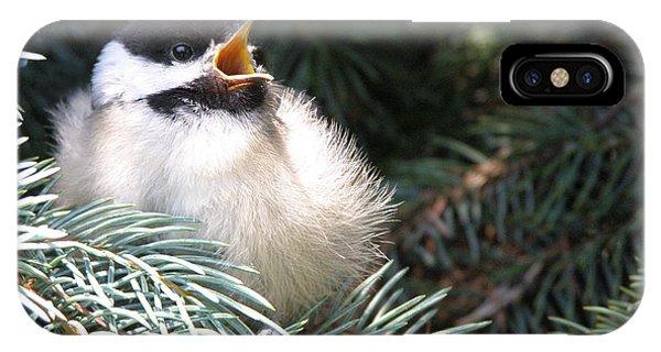 Sweet Chickadee IPhone Case