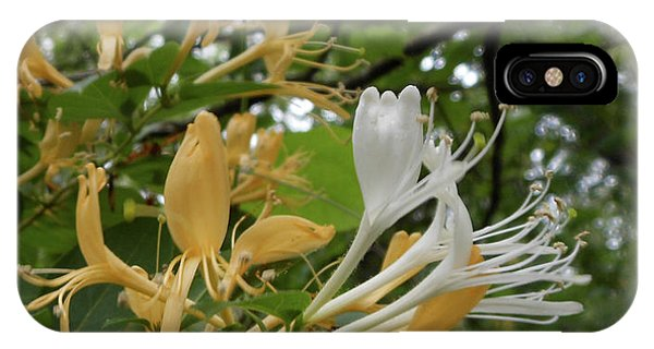 Sweet Honeysuckle Shrub IPhone Case