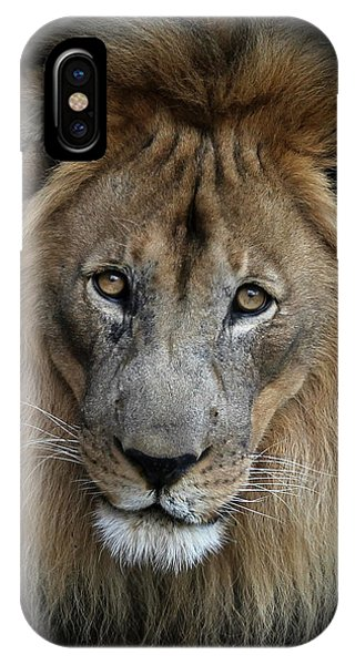 Sweet Male Lion Portrait IPhone Case