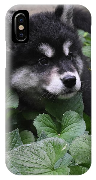 Wolf Pup Iphone Cases Page 10 Of 10 Fine Art America
