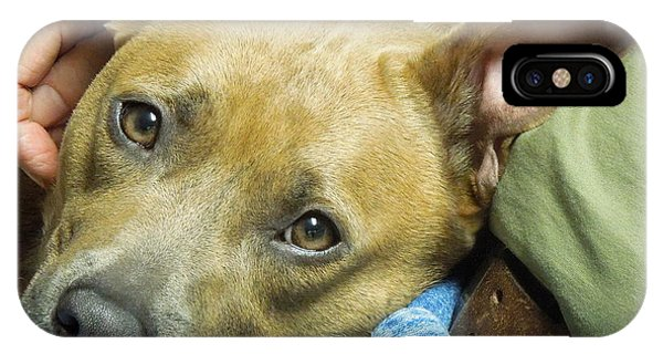 Sweet Pit Bull . Face Of Love IPhone Case