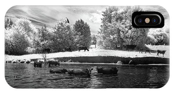 Swimming With Cows II IPhone Case