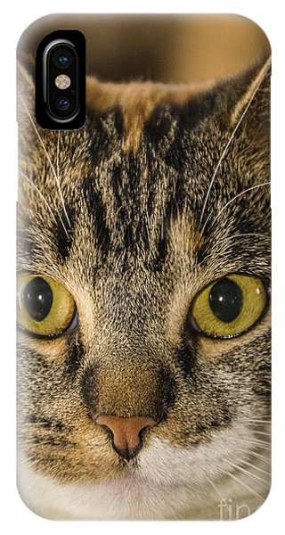 Symmetrical Cat IPhone Case