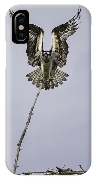 Ospreys iPhone Case - Symmetry by Everet Regal
