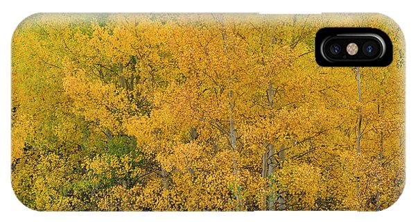 IPhone Case featuring the photograph Symphony In Gold by Ron Cline