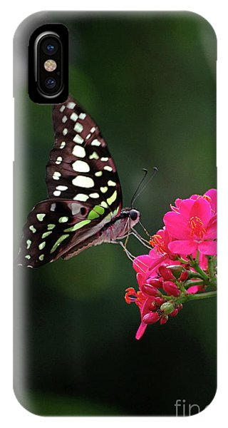 Tailed Jay Butterfly -graphium Agamemnon- On Pink Flower IPhone Case
