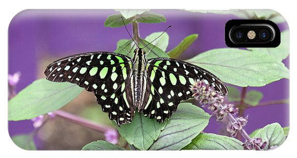 Tailed Jay Butterfly In Puple IPhone Case