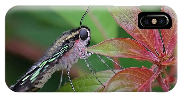 Tailed Jay Butterfly Macro Shot IPhone Case