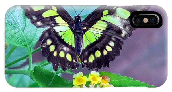 Tailed Jay Visits Lantana IPhone Case