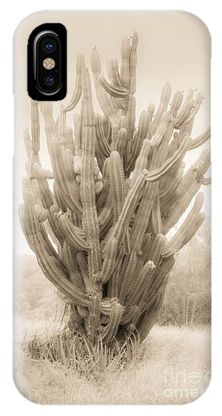 Tall Cactus In Sepia IPhone Case