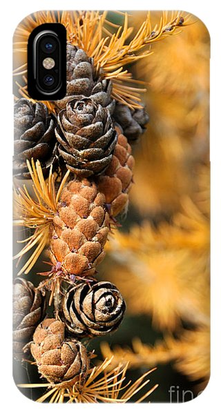 Tamarack Larch Tree In The Fall  IPhone Case