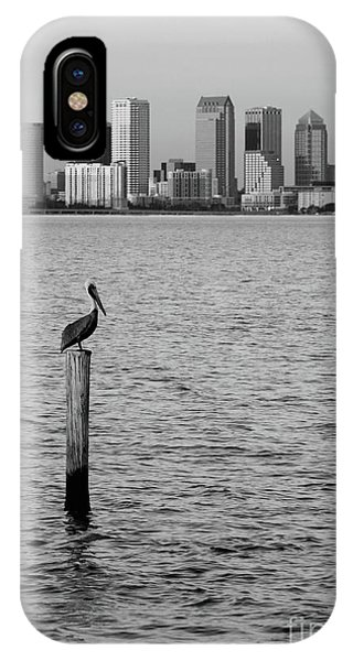 iPhone Case - Tampa Skyline And Pelican Black And White by Carol Groenen