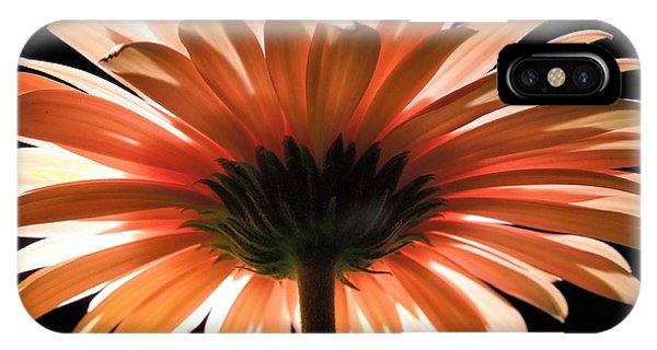 Tangerine Gerber Daisy IPhone Case