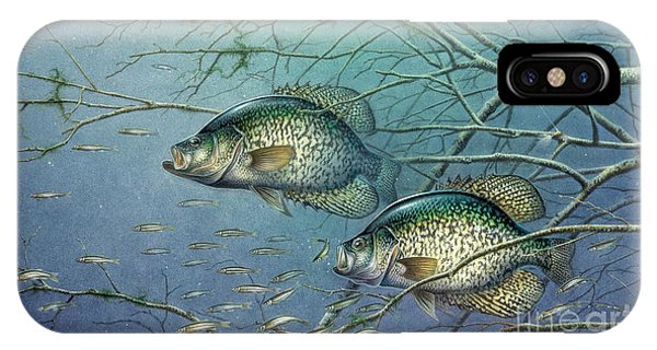Tangle Covered Crappie IPhone Case