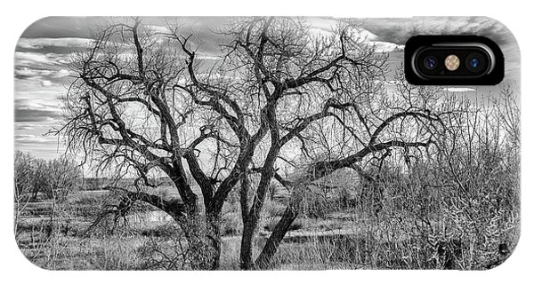 Tangled Old Tree On Platte River IPhone Case