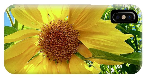 Tangled Sunflower IPhone Case