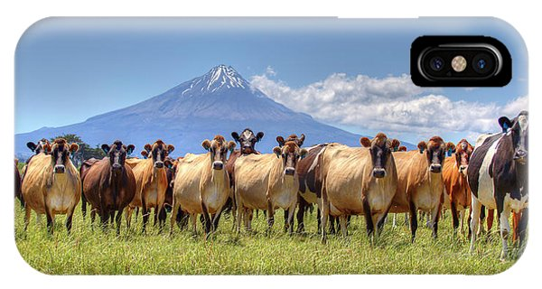 Taranaki Cows IPhone Case