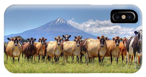 Taranaki Cows IPhone Case