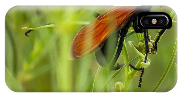 Tarantula Hawk 1 IPhone Case