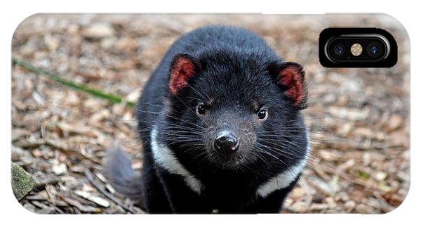Tasmanian Devil IPhone Case
