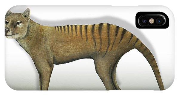 Tasmanian Tiger-thylacinus Cynocephalus-tasmanian Wolf-lobo De Tasmania-tasmanian Loup-beutelwolf    IPhone Case