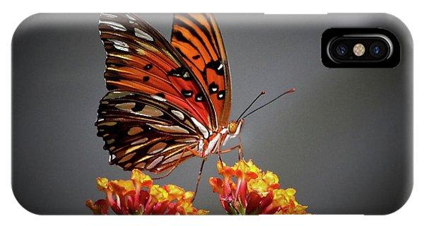 Agraulis Vanillae iPhone Case - The Taster Gulf Fritillary Butterfly Art by Reid Callaway