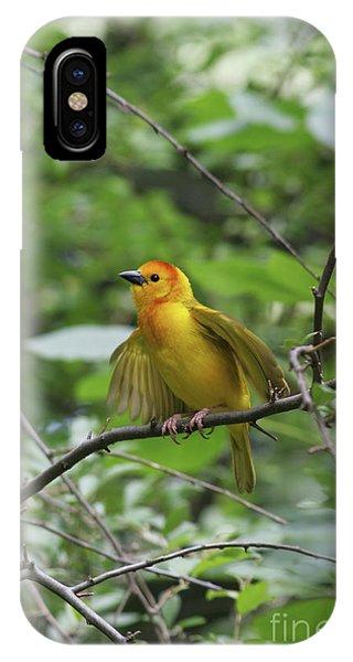Taveta Golden Weaver #3 IPhone Case