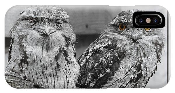 Tawney Frogmouths IPhone Case