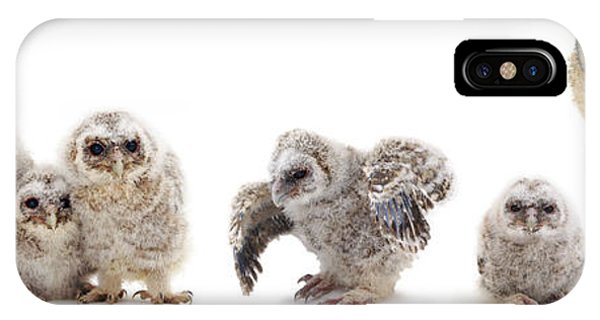 Tawny Owl Family IPhone Case