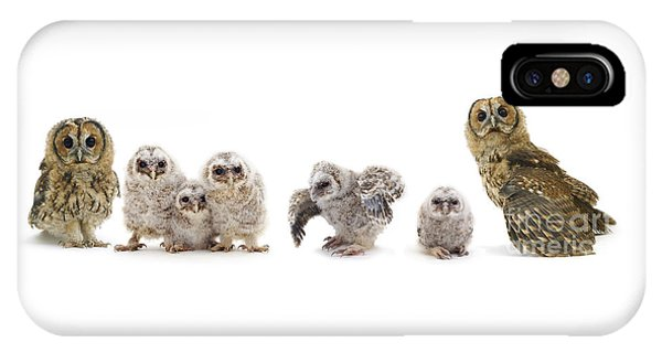 Tawny Owl Family IPhone Case