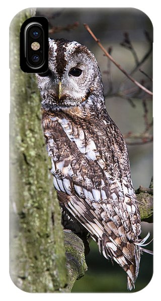 Tawny Owl In A Woodland IPhone Case