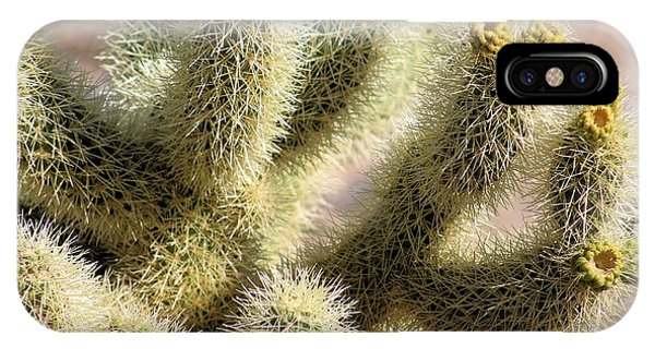 Teddy Bear Cholla iPhone Case - Teddy Bear Cholla #3 by G Berry