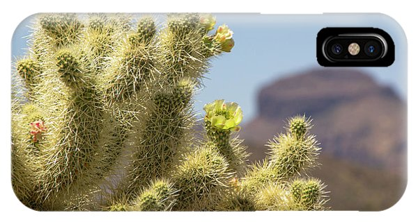 Cylindropuntia Bigelovii iPhone Case - Teddy Bear Cholla Cactus With Flower by Amy Sorvillo
