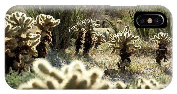 Teddy Bear Cholla iPhone Case - Teddy Bear Forest by Kelley King
