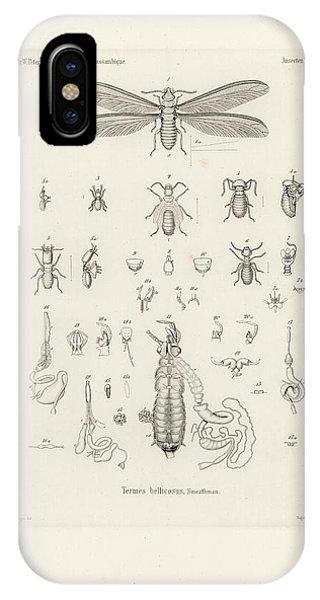 Termites, Macrotermes Bellicosus IPhone Case