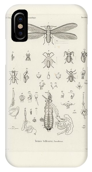 IPhone Case featuring the drawing Termites, Macrotermes Bellicosus by H Hagen