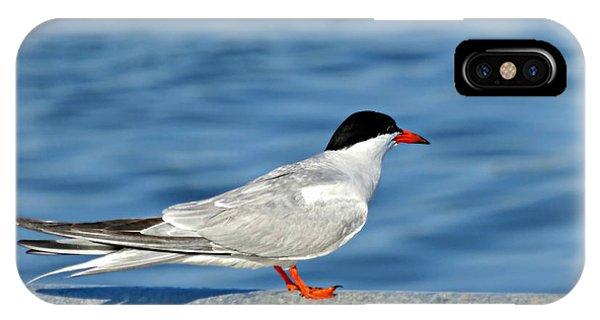 Tern IPhone Case