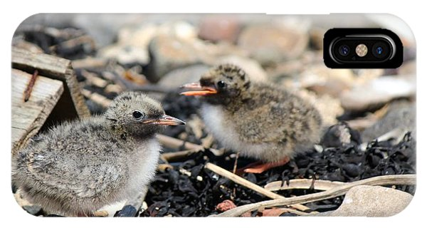 Tern Chicks IPhone Case