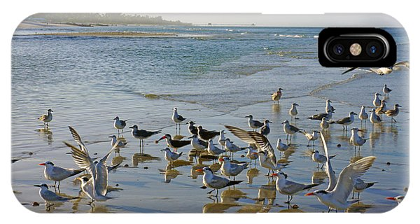 Terns And Seagulls On The Beach In Naples, Fl IPhone Case