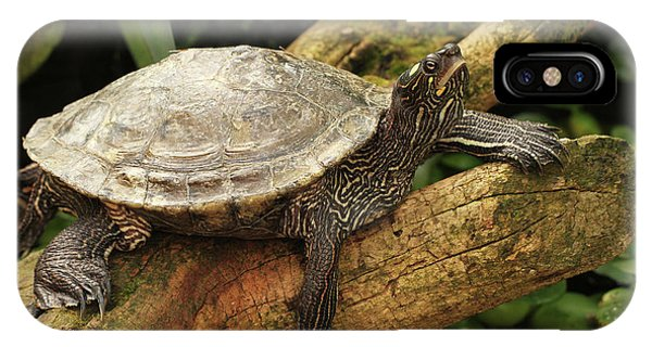 Tess The Map Turtle #3 IPhone Case