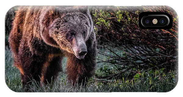 Teton Grizzly IPhone Case