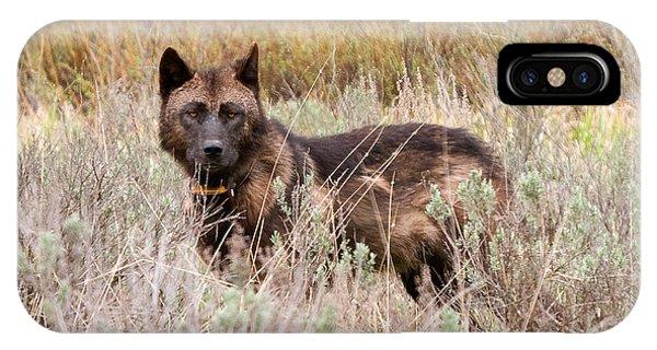 Teton Wolf IPhone Case